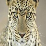 Jaguar Mentality
